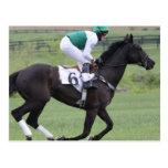 Race Horse Galloping Postcard