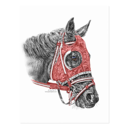 Race Horse Portrait Silks Postcard