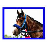 Race horse post card