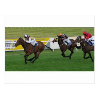 race horse, racing sports postcard