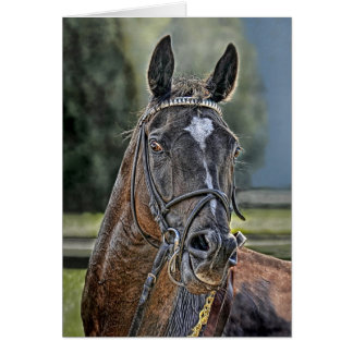 Race Horse Straight off Track Greeting Card