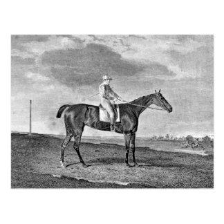 Race Horse Vintage Art Postcard