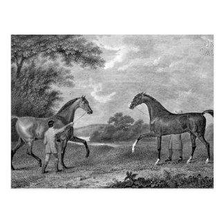 Race Horses Black and White Postcard