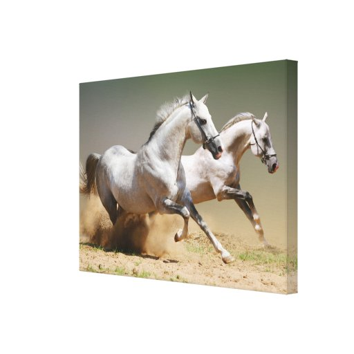 Race the Wind Horses Gallery Wrapped Canvas