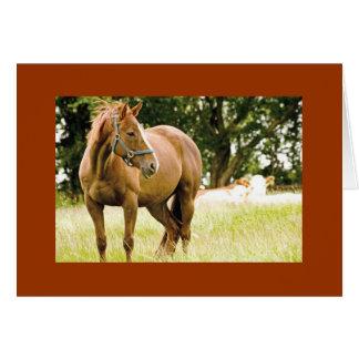 Racehorse in Field Card