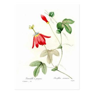Racemosa de la pasionaria tarjetas postales