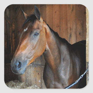 Rachel's Valentina Square Sticker