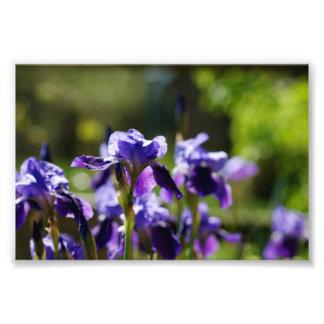 Racimo 6 x del iris impresión fotográfica 4 fotografías