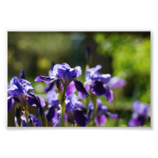 Racimo 6 x del iris impresión fotográfica 4