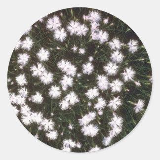 racimo blanco blanco, (clavel Hyssopifolius) flujo Pegatina Redonda