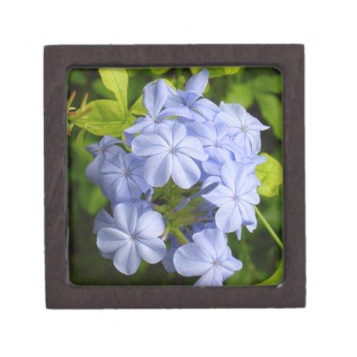 Racimo de flor azul encantador cajas de recuerdo de calidad