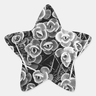 Racimo de flor blanca pegatina en forma de estrella