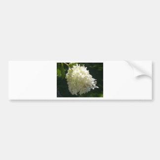 Racimo de flor blanco del Hydrangea Pegatina De Parachoque