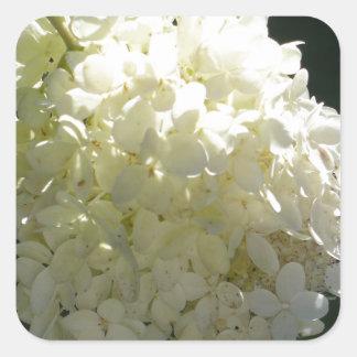 Racimo de flor blanco del Hydrangea Pegatina Cuadrada
