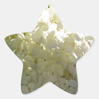 Racimo de flor blanco del Hydrangea Pegatina En Forma De Estrella