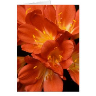 Racimo de flor de Clivia Tarjeta De Felicitación