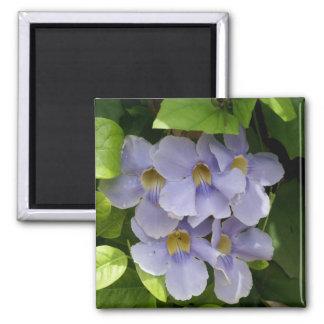Racimo de flor de la vid del cielo azul imán cuadrado
