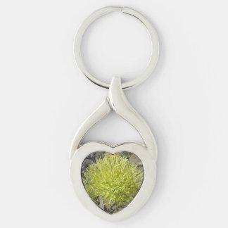 Racimo de flor gigante del agavo llavero plateado en forma de corazón