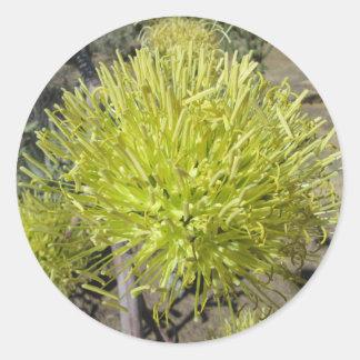 Racimo de flor gigante del agavo pegatina redonda
