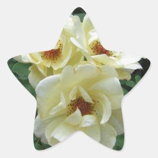Racimo de flor pegatina en forma de estrella