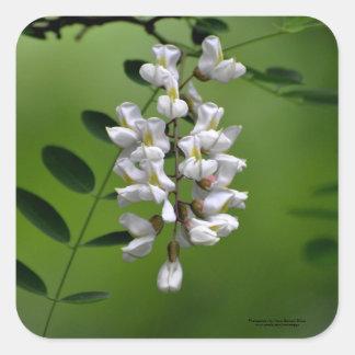 Racimo de flores blancas pegatina cuadrada