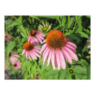 Racimo de flores del cono fotografías