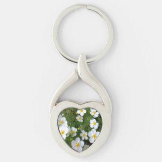 Racimo de flores del Potentilla Llavero Plateado En Forma De Corazón