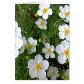Racimo de flores del Potentilla Tarjeta De Felicitación