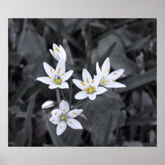 Racimo de la foto macra BW/Color de las mini flore Posters