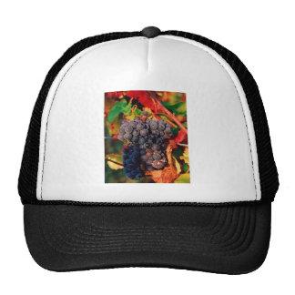 Racimo de la uva gorras