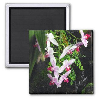 Racimo de orquídeas imán cuadrado