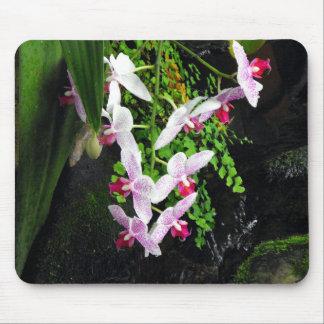 Racimo de orquídeas alfombrillas de raton