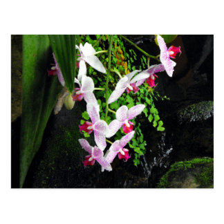 Racimo de orquídeas tarjeta postal