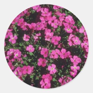 Racimo rosado rosado, (Aubrieta Cultorum) flores Pegatina Redonda