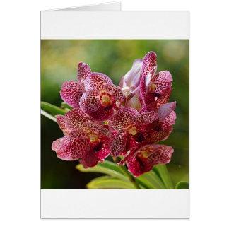 Racimo tropical de la orquídea de Vanda Felicitaciones