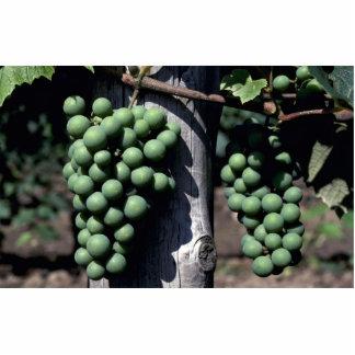 Racimos verdes de la uva fotoescultura vertical