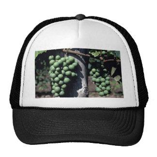 Racimos verdes de la uva gorras de camionero