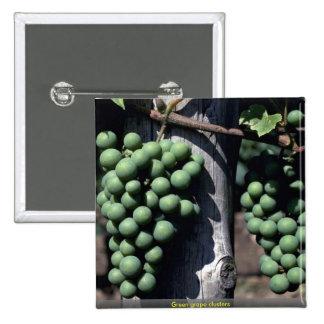 Racimos verdes de la uva pins