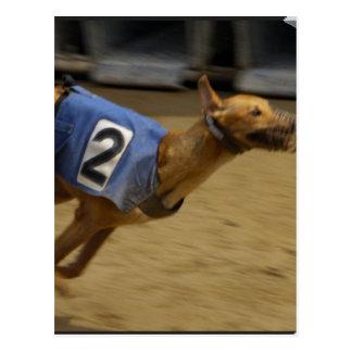 Racing Greyhound Postcard