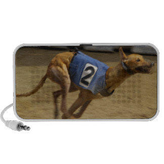 Racing Greyhound Speakers
