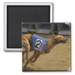 Racing Greyhound Square Magnet Magnet