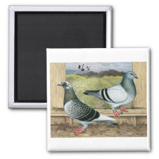 Racing Homers in Loft 2 Inch Square Magnet