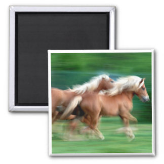 Racing Palomino Horses Square Magnet Fridge Magnets