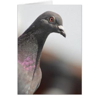 Racing pigeon card