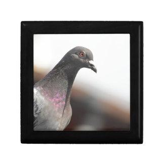 Racing pigeon jewelry box