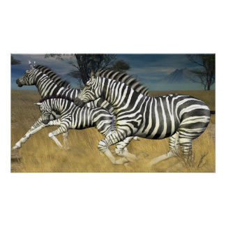 Racing Stripes - Herd of Zebra Poster print