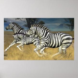 Racing Stripes - Running Zebra Print