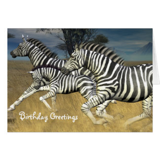 Racing Stripes - Zebra Birthday Card