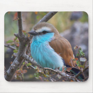 Racket-Tailed Roller Mousepad