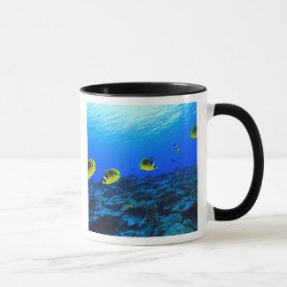 Racoon Butterflyfish Chaetodon lunula), North Mug